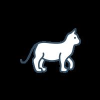 Cat Food & Supplies