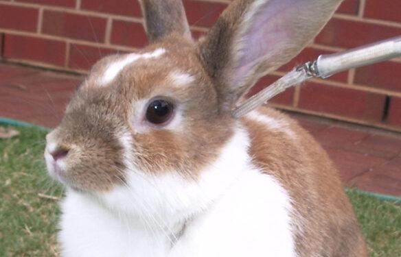 Exercise-for-rabbits-lizzie-sanders-fodder