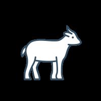 Goat Food & Supplies