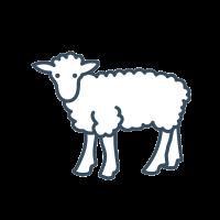 Sheep Food & Supplies
