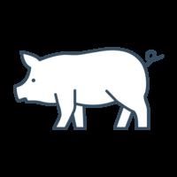 Pig Feed & Supplies